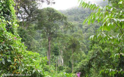 Was ist am Regenwald besonders?